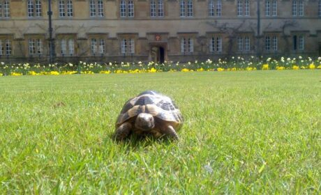 DO leave home without…. Your Tortoise
